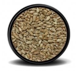Hobi - Hobi Kırmızı Buğday 25kg